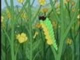 LB- Caterpillars