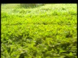 Sky Cam - Magnolia Woodlands