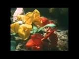 diane webber 8mm movies